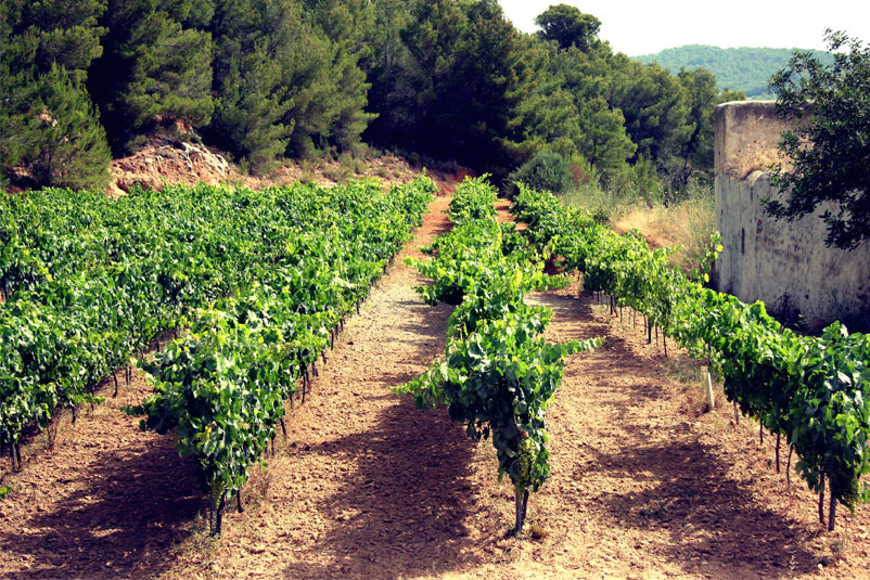 Savour Ibiza's Best Local Wines in 2017