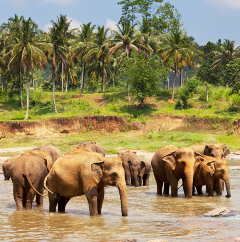 Encounter These 10 Animals in Sri Lanka