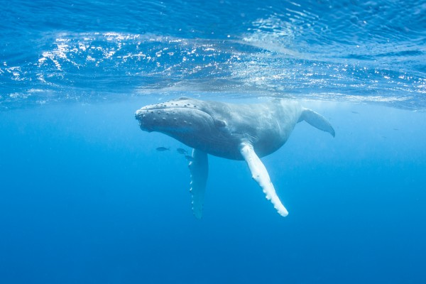 The Best of Sri Lankan Wildlife: Dolphin and Whale Spotting