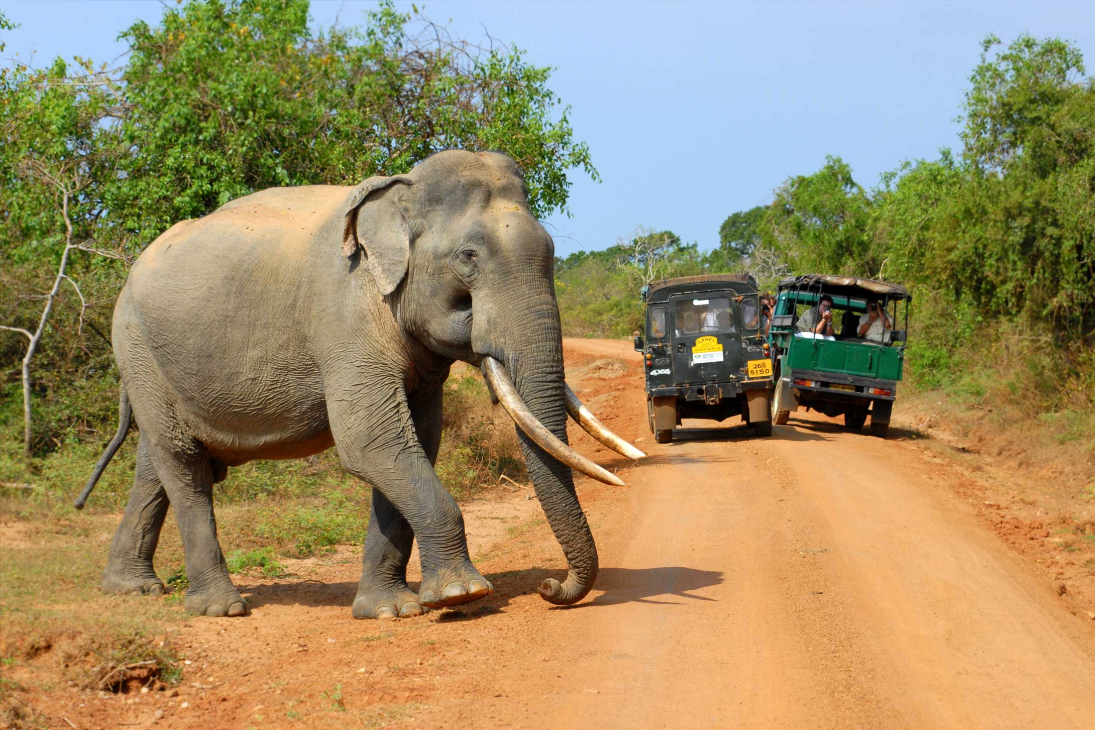 The Safari Options in Sri Lanka. Yala or Udawalawe?